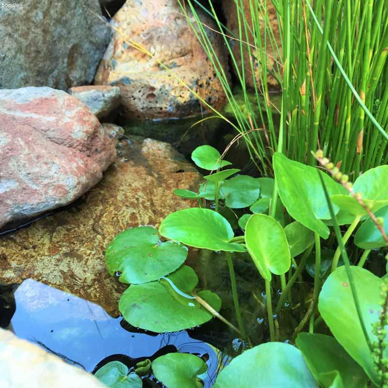Boodle Concepts - Building a Frog Pond